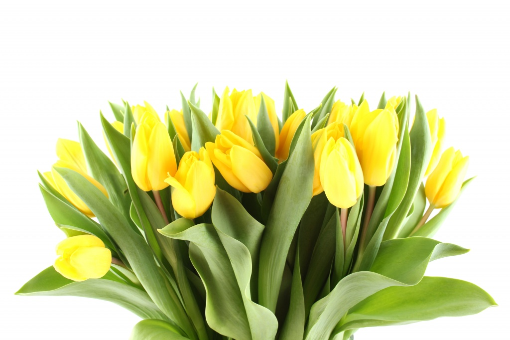 yellow-tulips.jpg